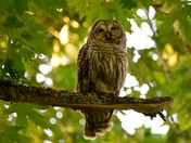 Owl in the park.