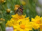 Grasshopper photo bomber