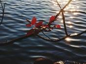 Autumn's Beginning