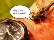 Hey buddy, what time is it?