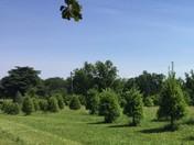 Merry Christmas Tree Farm, Central, SC