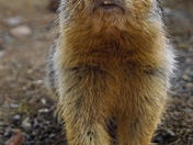 Friendly Gopher