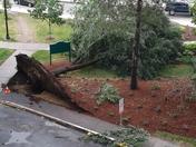 Tree Medford