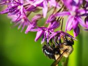 EG_067 | Bee