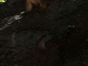 Squirrel backtalk