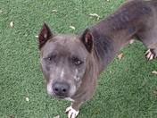 Junebug is perfect, housetrained, knows commands, great with dogs!