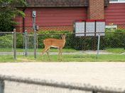 Lost deer #2