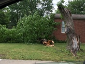 Storm Damage in OP