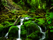 2c. A green stream