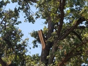 Oak branch falls on house in Citrus Heights