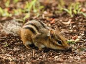 Nut Hunt