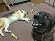 Koda and Foxy