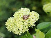 Snail on a journey