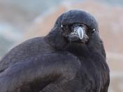 Crowsup
