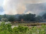 Cottonwood on fire