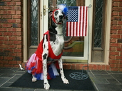 Lainey ready for the 4th!