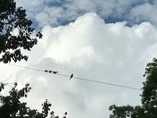 Doves and clouds