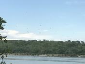 Turkey vultures on the Platte