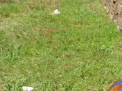 Reedy / Falls Park pollution