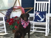 Happy 4th of July from Scout!