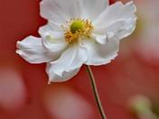 PG Flower