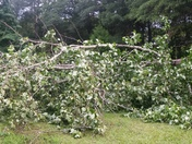 Storm Damage in Piedmont