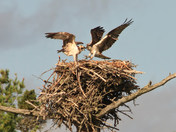 Time to leave the nest