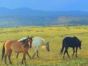 Horses roaming in Cubero