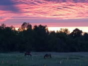Summer sunset with horses