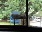 Big fat lazy summer squirrel