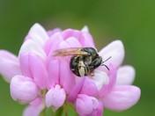 Busy Bee Three(The Nap)