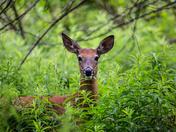 Deer Diner