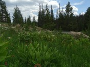 Wasatch National Forest - Mirror Lake Highway