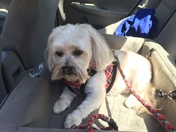 Grooming day I can be reached at my cell phone