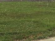 Hail in Wilkesboro