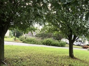 Wind downs trees in Ardmore Farms Subdivision