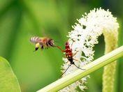 Bug verses the Bee