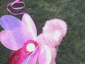 Loafy;  the magic butterfly fairy doggie