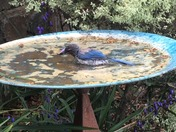 More Than Just A Bird Bath :-)