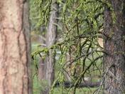 Fremont National Forest