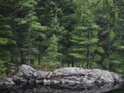 Nature's Simplicity