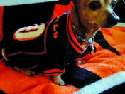 Daddy...Bengals number 1 fan
