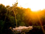 Sun vs Flowers