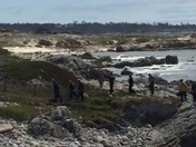 Water rescue by Asilomar Beach in Pacific grove