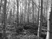 Ashley National Forest