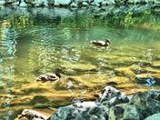 Bowness Lagoon