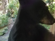 Bear cub and her 300 lb. momma bear came to my Paris Mountain home today .