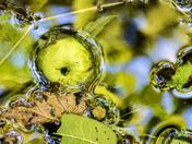 Apple, Leaves, Water