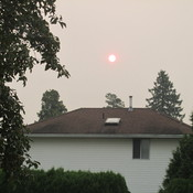 Forest Fire Smoke