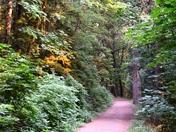 Trails of Goldstream